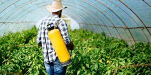 defensa-de-plagas-y-enfermedades-en-agricultura-ecologica